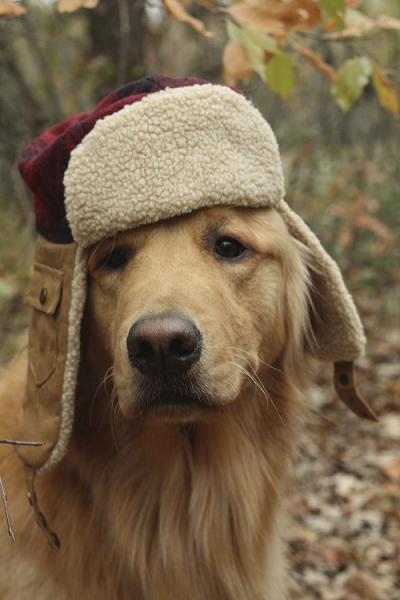 Get Your Share of Fun: Go on a Winter Hike with Your Pooch